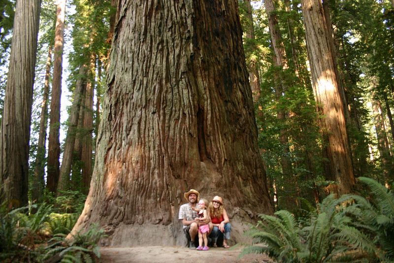 Big Redwood